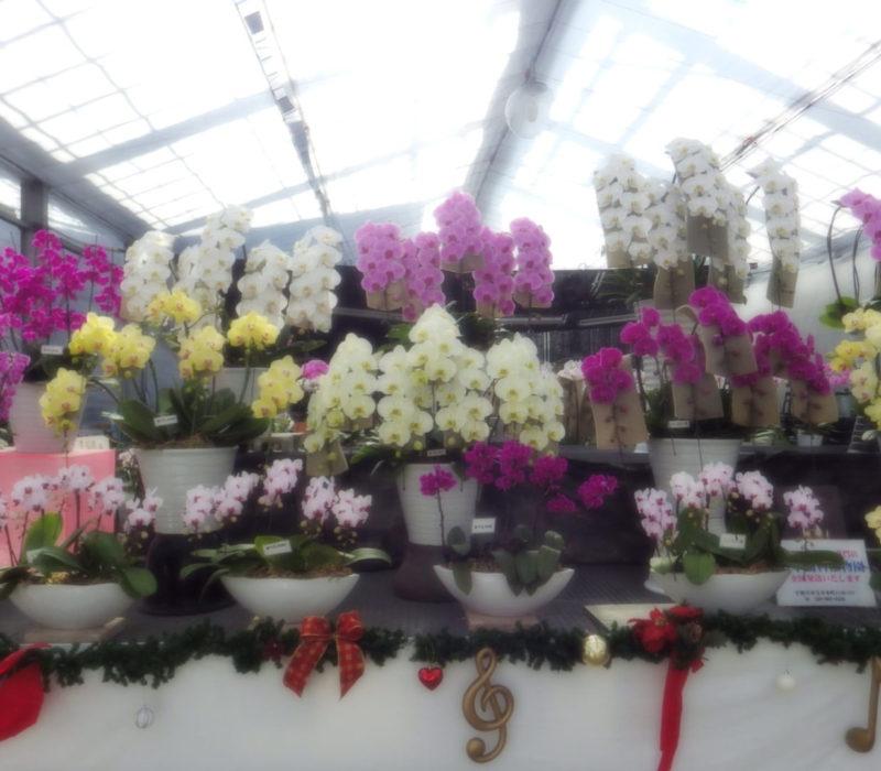日本蘭科植物園