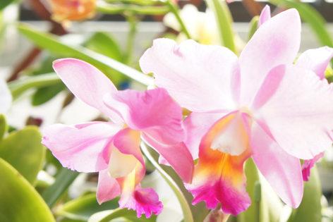 五台山洋蘭園