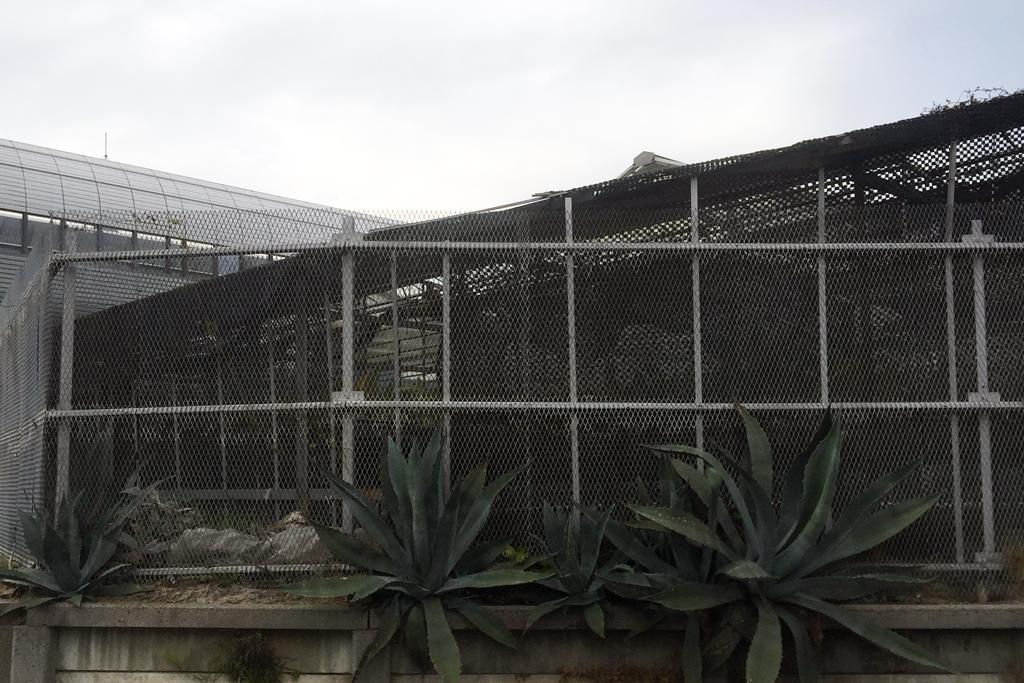 白石洋蘭園