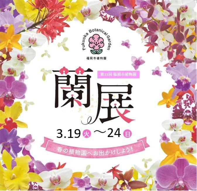 第21回福岡市植物園蘭展