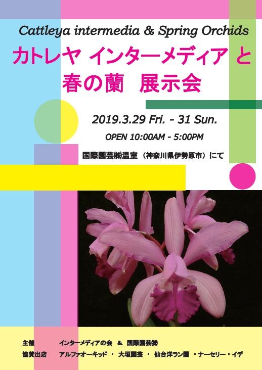 カトレヤ インターメディアと春の蘭 展示会