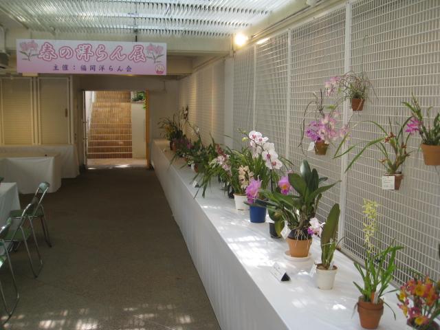 福岡市植物園 春の洋らん展