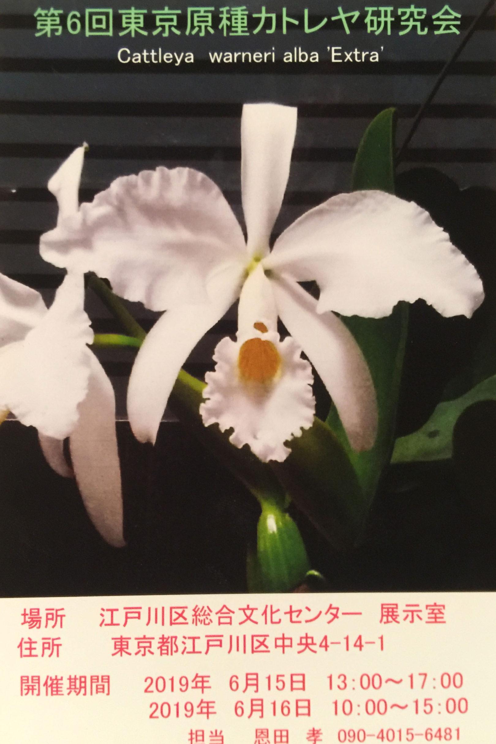 東京原種カトレア研究会