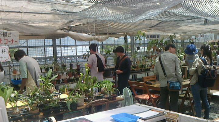 夏のらんと食虫植物展