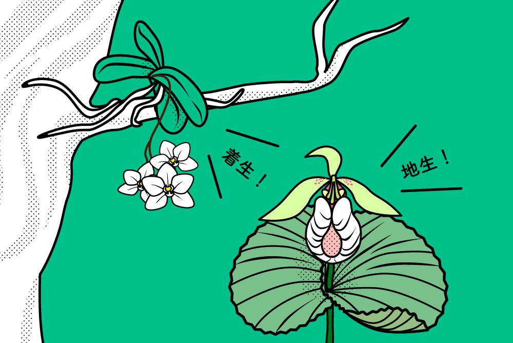 着生蘭と地生蘭