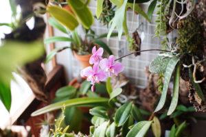 基本のキ。ランってどんな植物?まずはランの特徴や性質を知ろう。