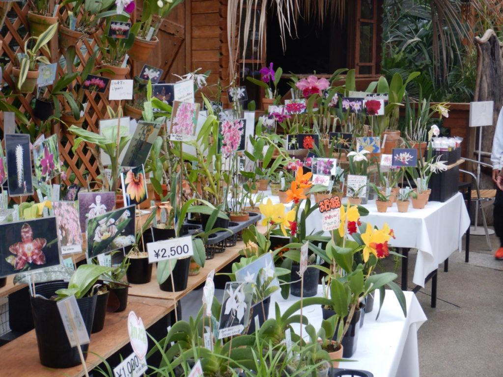 咲くやこの花館 蘭展