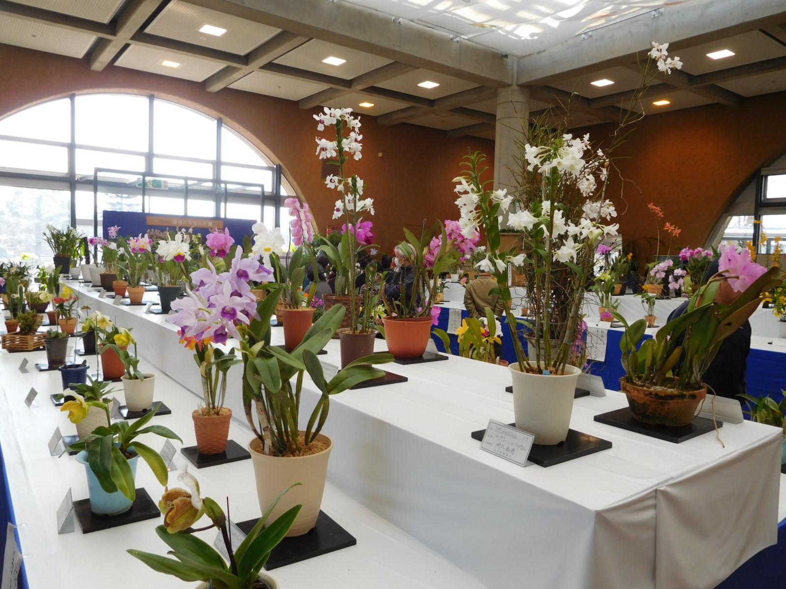 第48回富山県蘭まつり大会