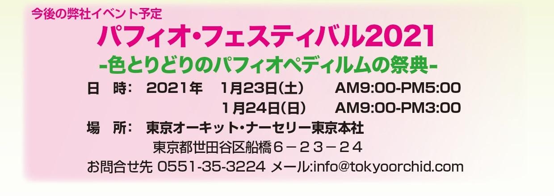 東京オーキット・ナーセリー・パフィオ フェスティバル